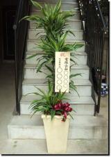 開院 祝い 観葉 植物 病院や整骨院の開院祝いに花・観葉植物を贈るときのマナー
